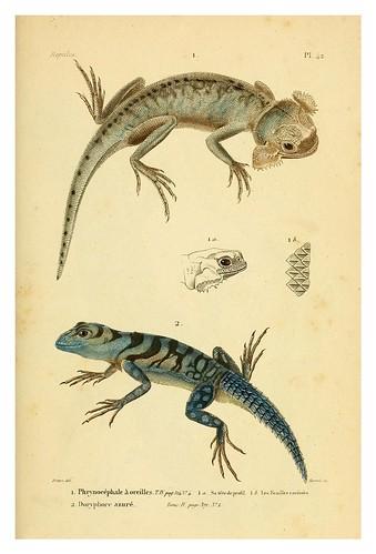 008-Erpétologie générale ou Histoire naturelle complète des reptiles 1834