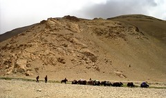 our yaks on there dayjob Tibet (reurinkjan) Tags: 2002 nikon tibet everest rongbuk tingri jomolangma tibetanlandscape janreurink བོད། བོད་ལྗོངས།