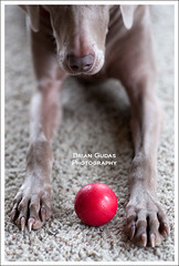 POTD -B- Shot for day 43 (Brian Gudas Photography) Tags: ball sadie redrock 365project