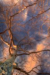 Sky Branch 3 (kcannon) Tags: blue arizona sky orange tree beautiful up rain yellow clouds creek oak looking perspective sedona az sycamore bark unusual lovely oakcreek justclouds