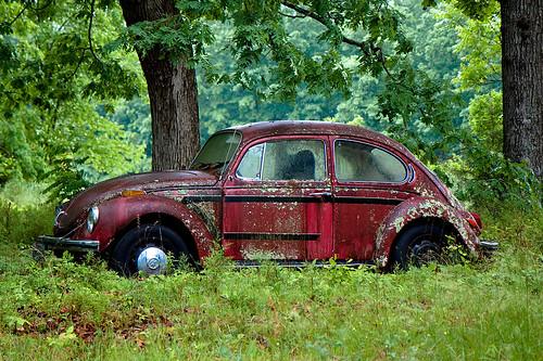 Moldy Car