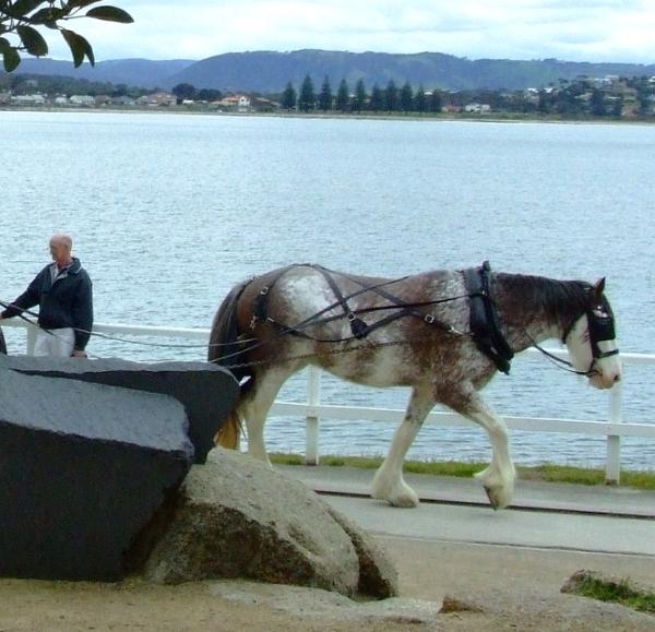 big horse 02