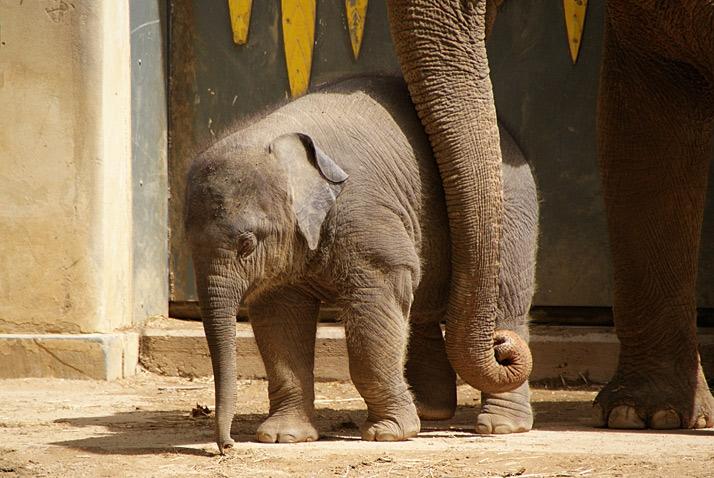 [afb. baby olifant zoo antwerpen kai-mook]