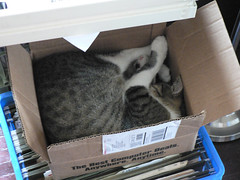 Darwin loves box