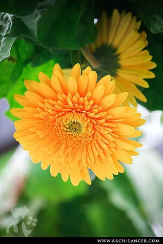 P_flower20
