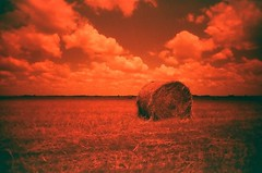 pick a bale of hay (s myers) Tags: red film field clouds 35mm landscape texas tx round hay bale myers staci redscale vivitarultrawideandslim smyers vuws puppiesofpurgatory