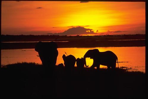 Botswana, Chobe River