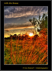 With the Breeze (Irishphotographer) Tags: trees sunset sun nature grass sunshine wind breeze kinkade beautifulireland imagesofireland craigavonlakes kimshatwell irishphotographer breathtakingphotosofnature beautifulirelandcalander wwwdoublevisionimageswebscom