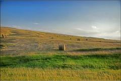 orton effect hay field.jpg (Father Tony) Tags: summer field southdakota landscape prairie hayfield adobephotoshopelements canonefs1755mmf28isusm canoneos50d ortoneffect adobephotoshopelements7 corsoncountysd
