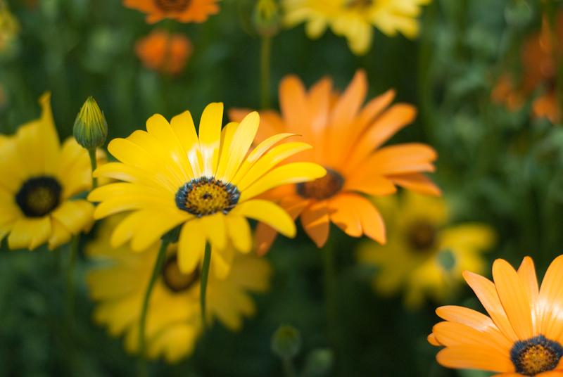 Norman's Flowers
