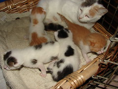 Two weeks old! (Jiobbe) Tags: cats cat kitten gatto katzen gatti mici gattini micini