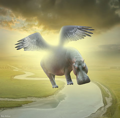 Impossible Dream :) (Ben Heine) Tags: africa sea sky sun mer france nature collage clouds river freedom soleil fly vanishingpoint big wings funny humorous different surrealism background joke fat humor perspective dream feather meadow manipulation humour rivire peinture digitalpainting creation ciel libert massive difference montage laugh huge wildanimal hippopotamus manip heavy dreamer promisedland weight gros montsaintmichel plumes fleuve plaine sauvage ailes conceptart blague ocan mattepainting hippopotame norme voler compositeimage poids lourd rveur heaviness impossibledream arrireplan benheine brasdemer terrepromise thesuperbmasterpiece lourdeur hubzay