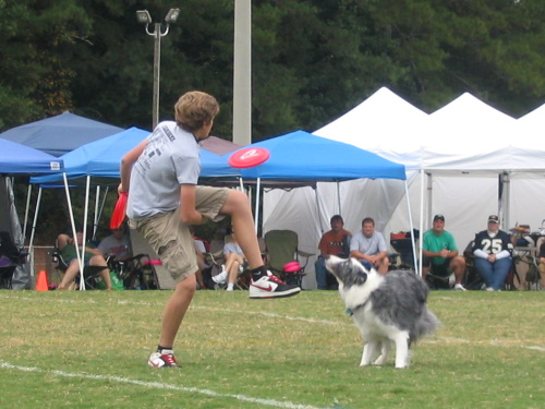 Frisbee Dogs - 1
