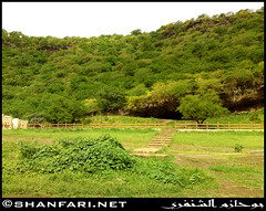 Wadi Darbat (Shanfari.net) Tags: flowers plants nature al natural ericsson sony greenery cave oman salalah  sultanate dhofar  khareef  haq  diplopoda     taqah    governate  madeinat  darbat taiq c905  raythut
