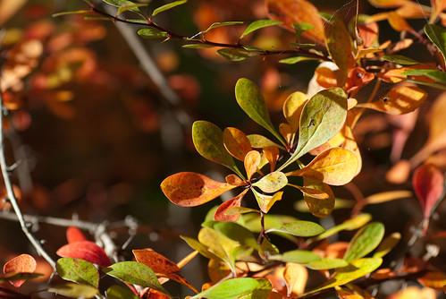 Herbstblattwerk