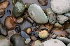 bug in rocks2