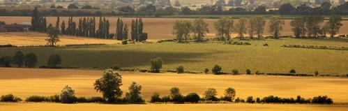 Panorama - July