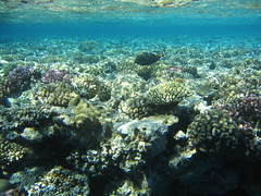 137_3771 (LarsVerket) Tags: egypt snorkling fisk undervannsfoto