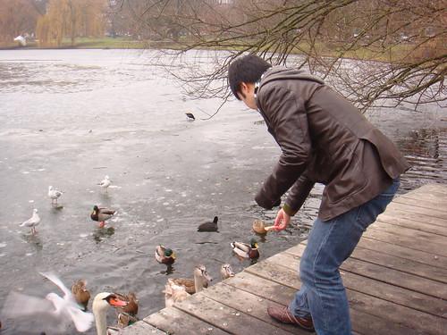 Feeding Birds at Kleiner Kiel