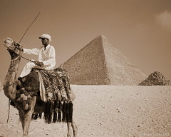 Camel tout at the Pyramids, Giza, Egypt (Simon Purdy) Tags: 1920s art sahara archaeology beauty animal architecture 1930s sand ancient ruins desert pyramid northafrica postcard middleeast cairo camel pyramids orient camels giza timeless khufu cheops greatpyramid pyramidofcheops greatpyramidofcheops khufuspyramid greatpyramidofkhufu