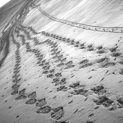 commuter belt (jenny downing) Tags: winter white snow abstract france snowy path curves tracks footprints explore prints impression pathway pathways wintery wintry infrance tracksinthesnow thewhitestuff explored jennypics heffalumpsandwoozles takeninfrance jennydowning andtheoccasionalmouseonhiswayhomefromthesupermarket photobyjennydowning