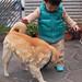 柴犬:Rioh & Shishimaru