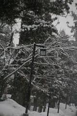 IMG_2212 (shinyai) Tags: japan aomori hirosaki