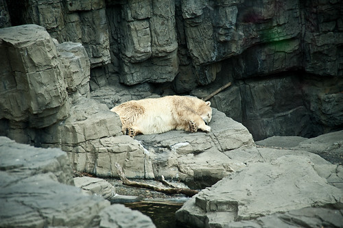 Central_Park_Zoo-6