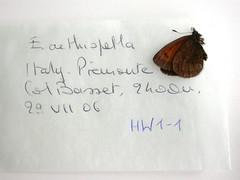 Erebia aethiopella