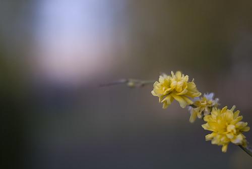 Towards the light (by Hamsteren)