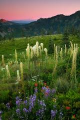 Silver Star wildflowers (Jesse Estes) Tags: wildflowers mounthood silverstar jesseestesphotography