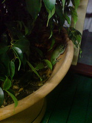Fastest frog in the south (jenhancock) Tags: australia 2009 florafauna