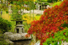 Beautiful Japanese garden in Autumn glory (Pictolicious) Tags: autumn red sculpture color reflection green fall water pool beautiful statue rock stone garden japanese maple colorful glory calm structure hut idol hanging greenery serene lush