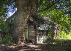 Fairy-Tale CABIN and TREE (tim heffernan) Tags: lighting new summer usa abandoned beauty fairytale photoshop photography photo cabin natural image tales fairy oldtree hudsonriver hdr backwater tjh finearts digitalarts boatslip huntingcabin timheffernan cabinandtree