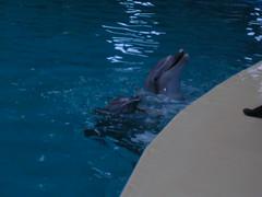 stanbul Dolphinarium (pelince.com) Tags: dolphin yunus havuz