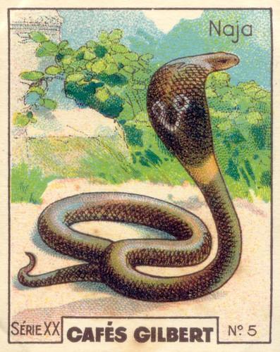 gilbert reptile 5