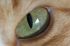 Eye from our cat Tara