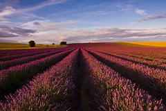 Lavender Fields (Baggers 2014) Tags: blue red sky clouds landscape pretty lavender wideangle hitchin ndgrad flickrchallengewinner cadwellfarm