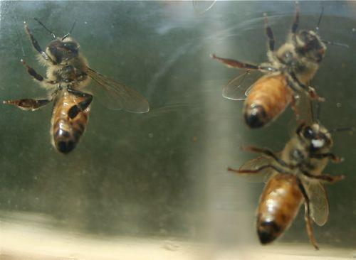 bee undersides
