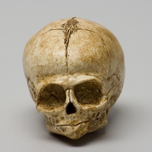 Fetal Skull Sculpt - first casting