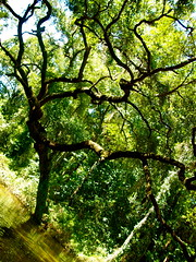 treee (heatherm815) Tags: summer tree river dead florida branches sunny deadriver