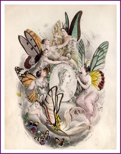 012-Les Papillons, métamorphoses terrestres des peuples de l'air- Pierre Amédée Varin