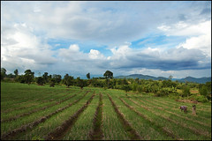 the countryside around Pai (silentdream) Tags: thailand countryside rice farming north fields farmer siam pai