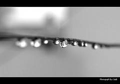 DROP...mirror of life (jas-B) Tags: macro water blackwhite nikon dof drop d40