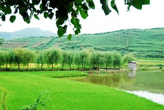 green (Melinda ^..^) Tags: china plant tree green field rural countryside village chinese fresh mel melinda corp hunan     chanmelmel