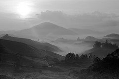 Another day, another sunrise - in B&W (QooL / بنت شمس الدين) Tags: travel sun mist nature sunrise landscape dawn tea hill valley plantation rays cameronhighlands qool sgpalas qoolens