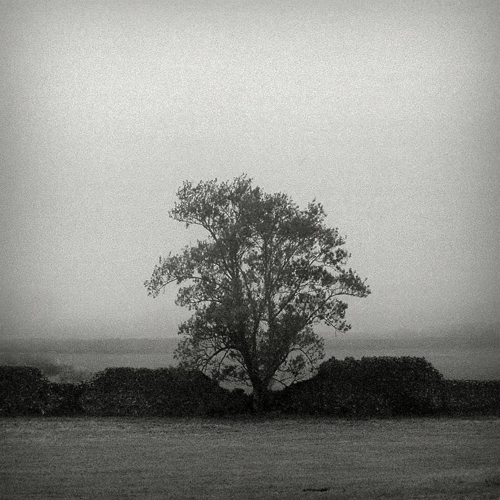 lonely tree #31970032 (2)