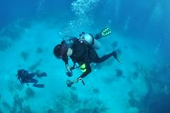 Diving DC-3 - Nassau, Bahamas (hankplank) Tags: airplane underwater scuba diving fisheye bahamas nassau wreck dc3 newprovidence tokina1017 lesfruitsdemer lesfruitsdemerorg