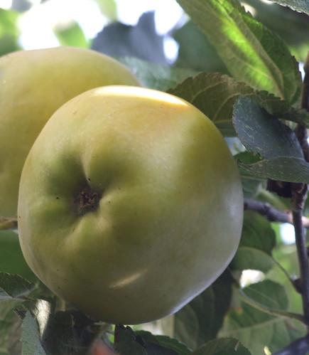 dolce alle mele 032