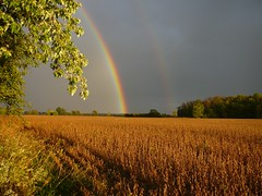 God's Artwork (bonnie5378) Tags: rainbow doublerainbow darksky naturesfinest soybeanfield godsartwork theunforgettablepictures canadianfemalephotographer theperfectphotographer qualitypixels vosplusbellesphotos lovinglifethroughalens